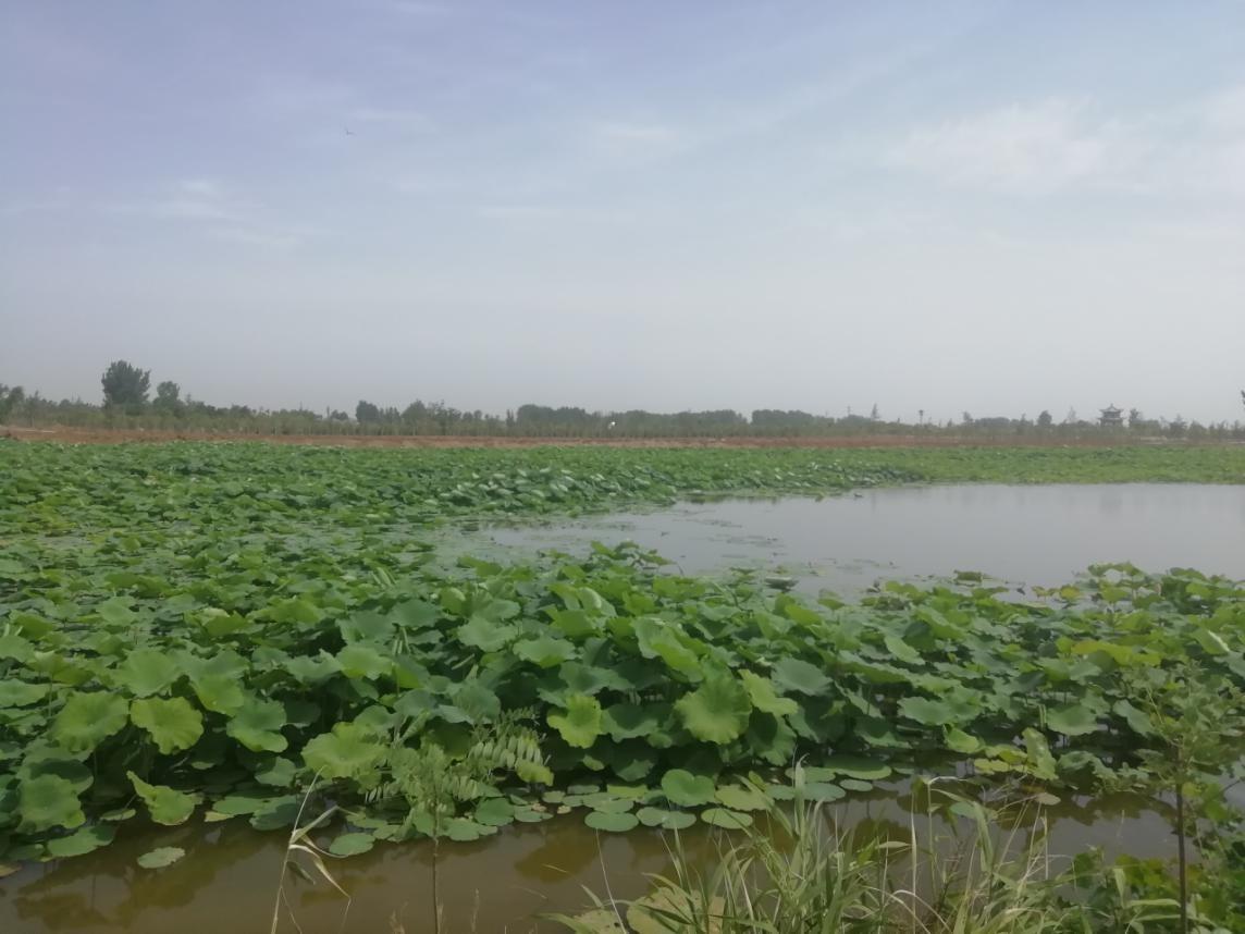 李楼镇:湿地保护见成效